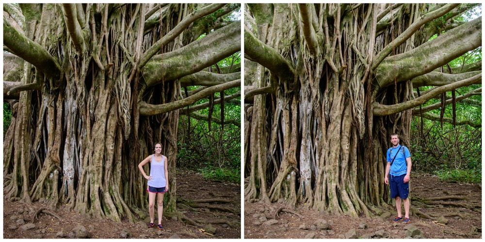 Road to Hana- Banyan Tree on Pipiwai Trail
