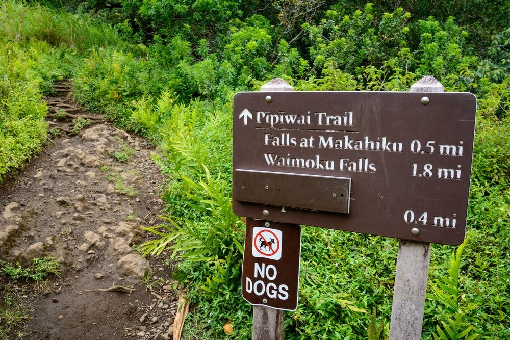 Road to Hana- Pipiwai Trail