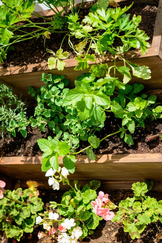 Diy Tiered Backyard : DIY Tiered Herb Garden Tutorial Living Room Wall Sconce Options