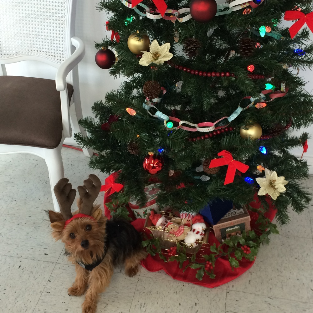 A Merry Woofmas from CLOV the shop reindeer.