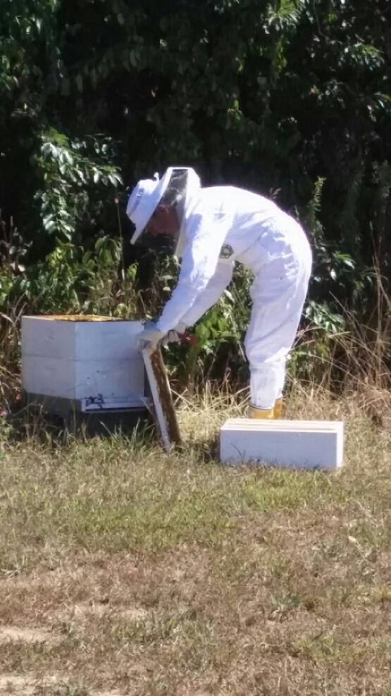 lisa_beekeeper7.jpg