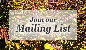 mailinglist-300x175.jpg