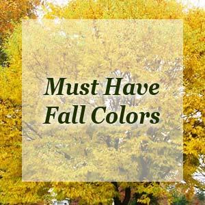 fallcolors-300x300.jpg