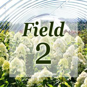 field2-300x300.jpg