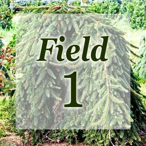 field1-300x300.jpg