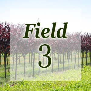 field3-300x300.jpg