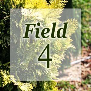 field4-300x300.jpg