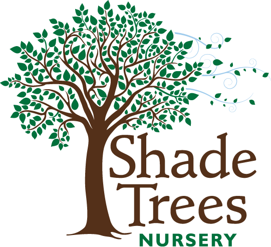 Shade Trees Nursery