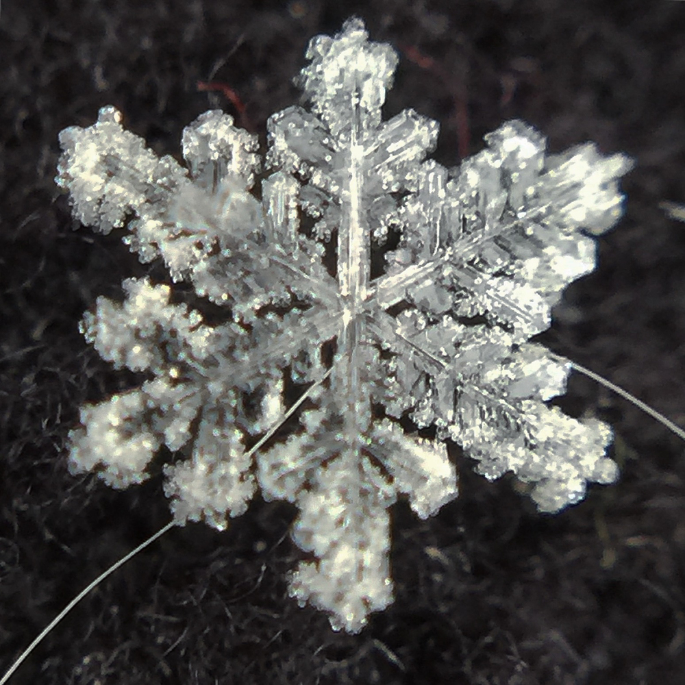 snowflake with cat hair
