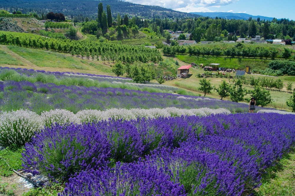 Forest Green Man Lavender Farm