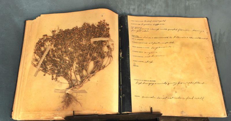 plantbooksplash2.jpg