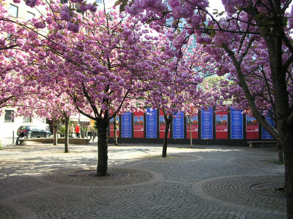 Das Oper Frankfurt Germany.JPG