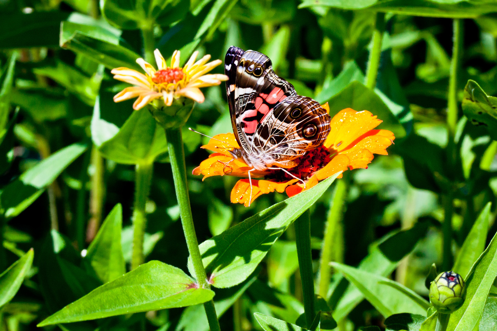 Butterfly II, Martha's Vineyard, MA