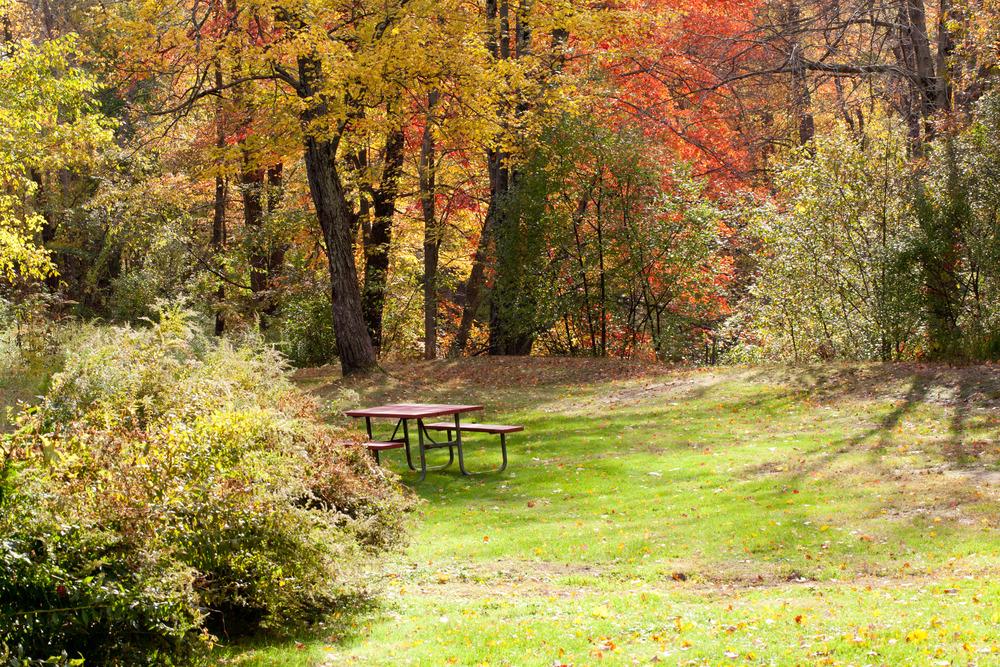 Fall Scene, Amherst, MA