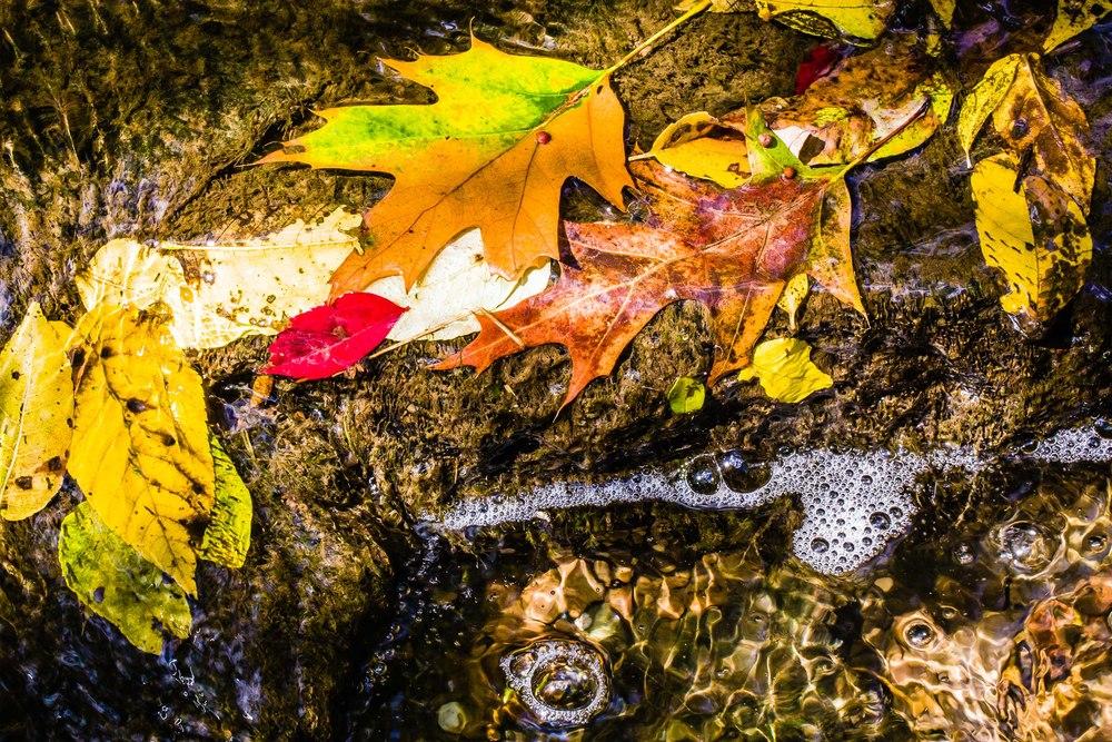 Allens Creek, Corbett's Glen, Rochester, NY