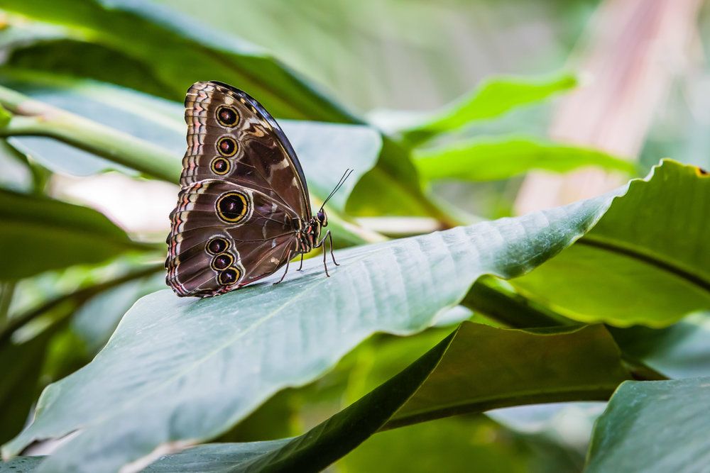 Resting Butterfly, Discovery Gardens at Fair Park, Dallas, Texas