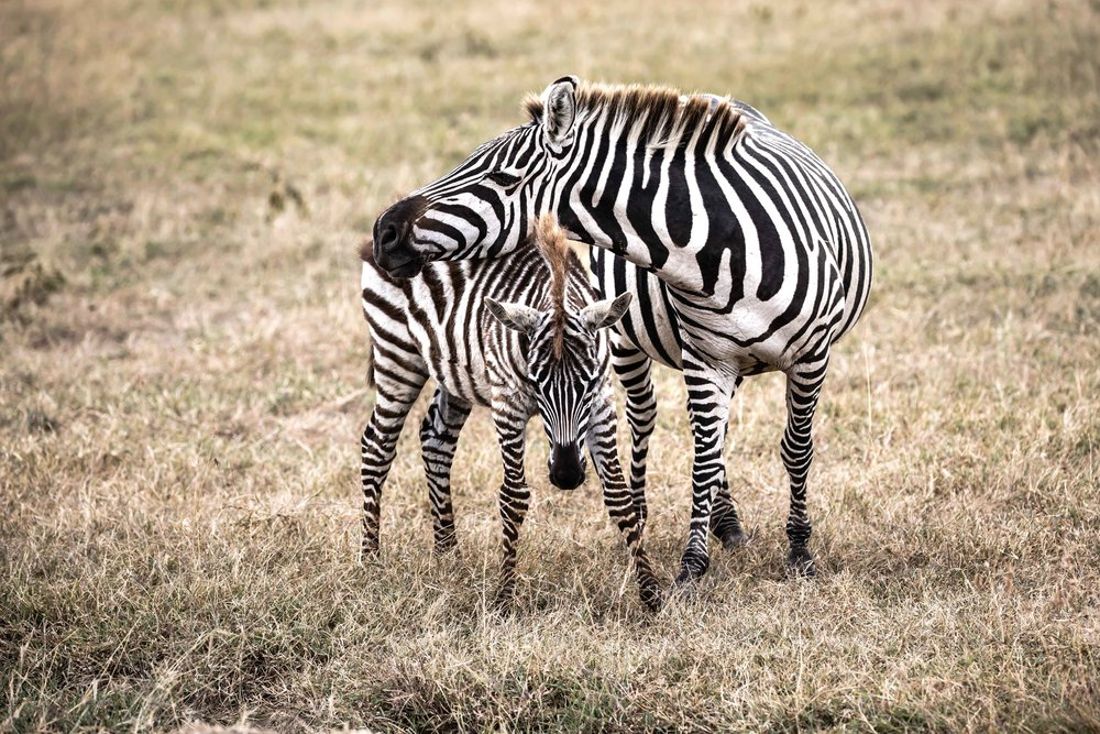 Mother and Child: Matching Outfits,  Ol Pejeta Reserve, Kenya