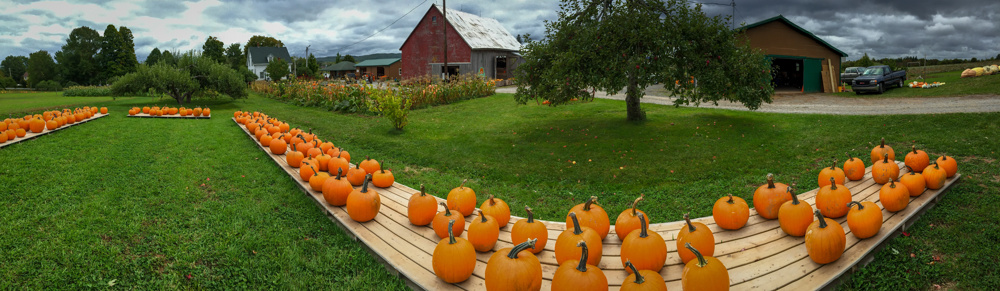 Pumpkins, Windsor, Nova Scotia