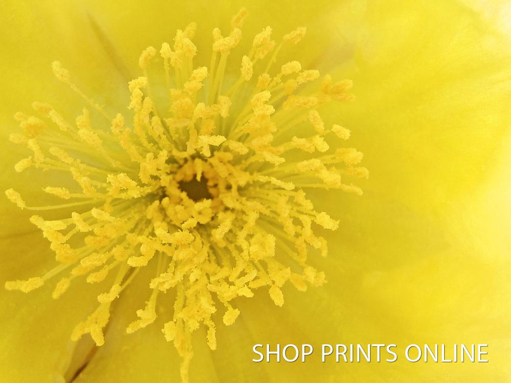 ShopPrints ONline.jpg