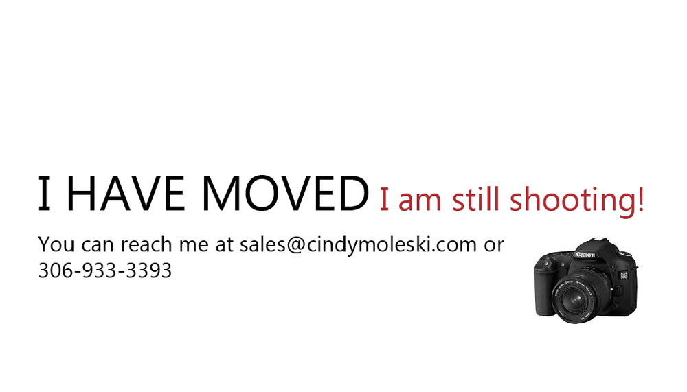 Moving- announcement-cindy-moleski-photography-saskatoon-saskatoon-professional.jpg