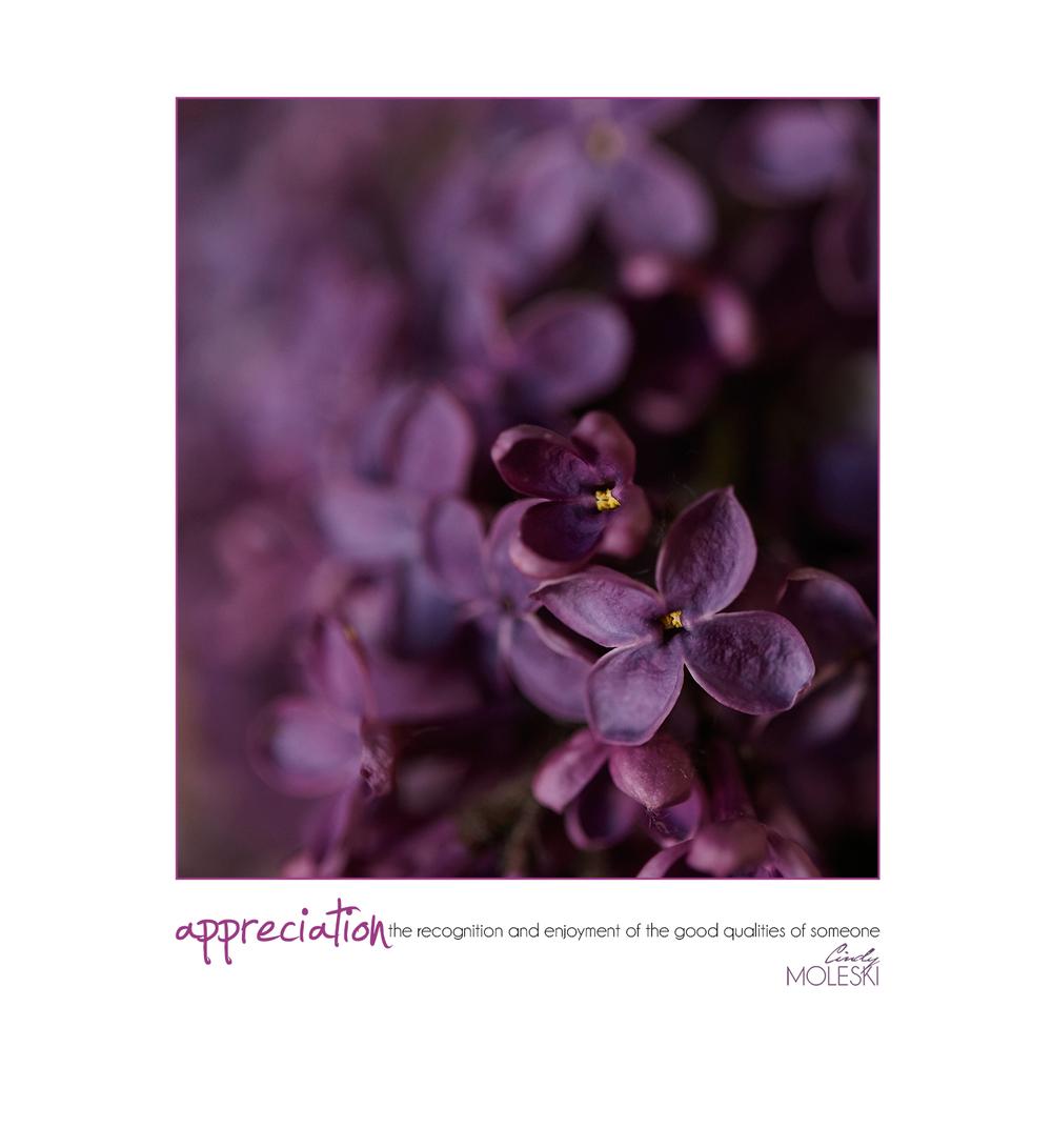Moody Purple cindy-moleski-professional-photographer-flowers-floral-lilacs-artistic-saskatoon-saskatchewan.jpg