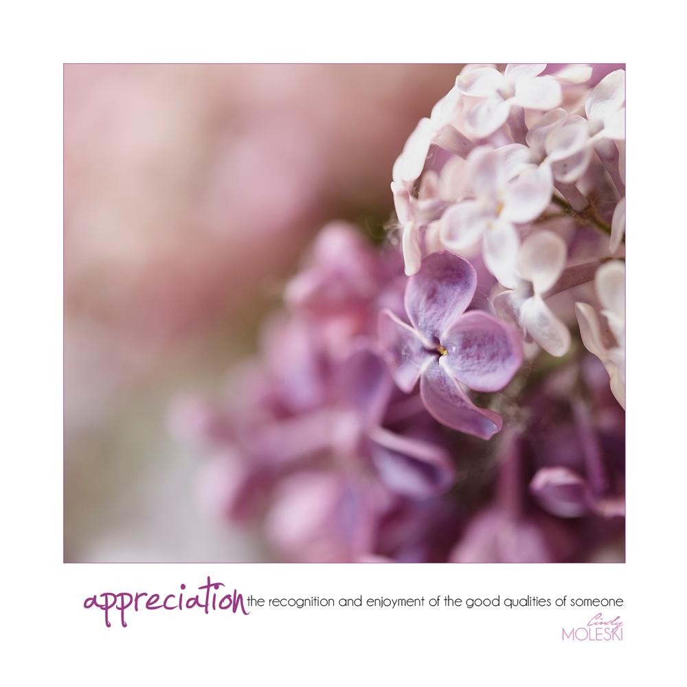 Cotton Candy cindy-moleski-professional-photographer-flowers-floral-lilacs-artistic-saskatoon-saskatchewan.jpg