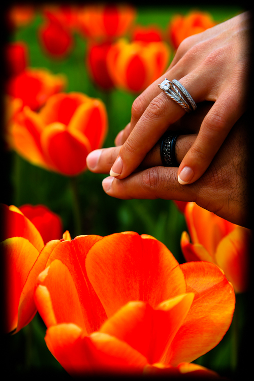 Engagement Photo Tulips  and Rings in DC