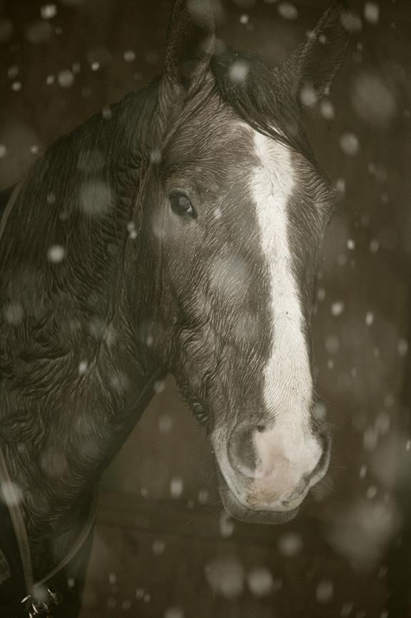 travel-horse-tone.jpg
