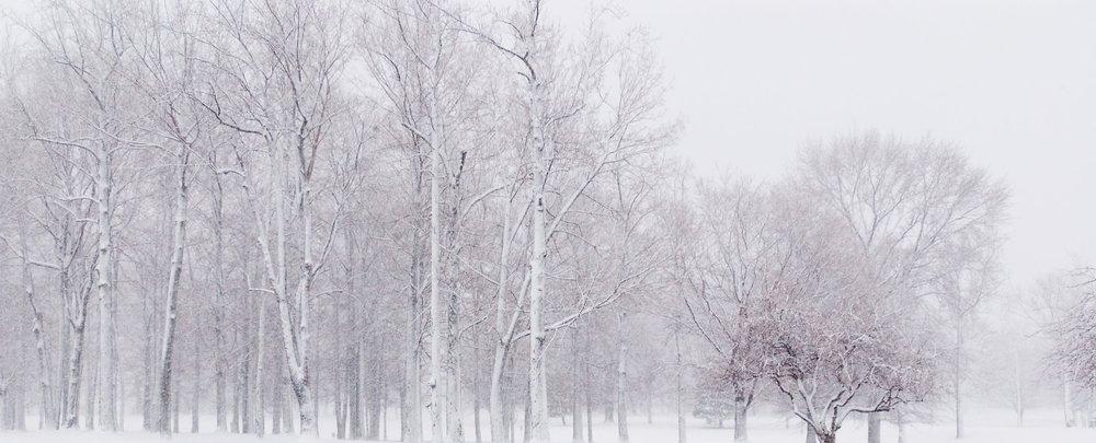 winter-snow-and-trees-3-1525661.jpg