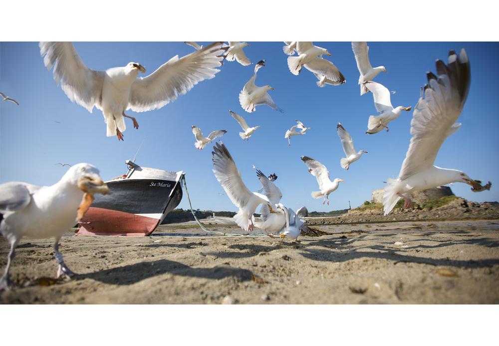 seagull1.jpg