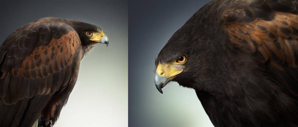 3hawks copy.jpg