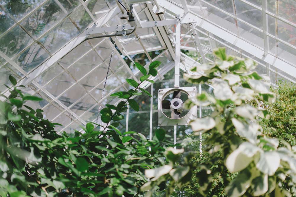 Tacoma Botanical Conservatory 01.jpg