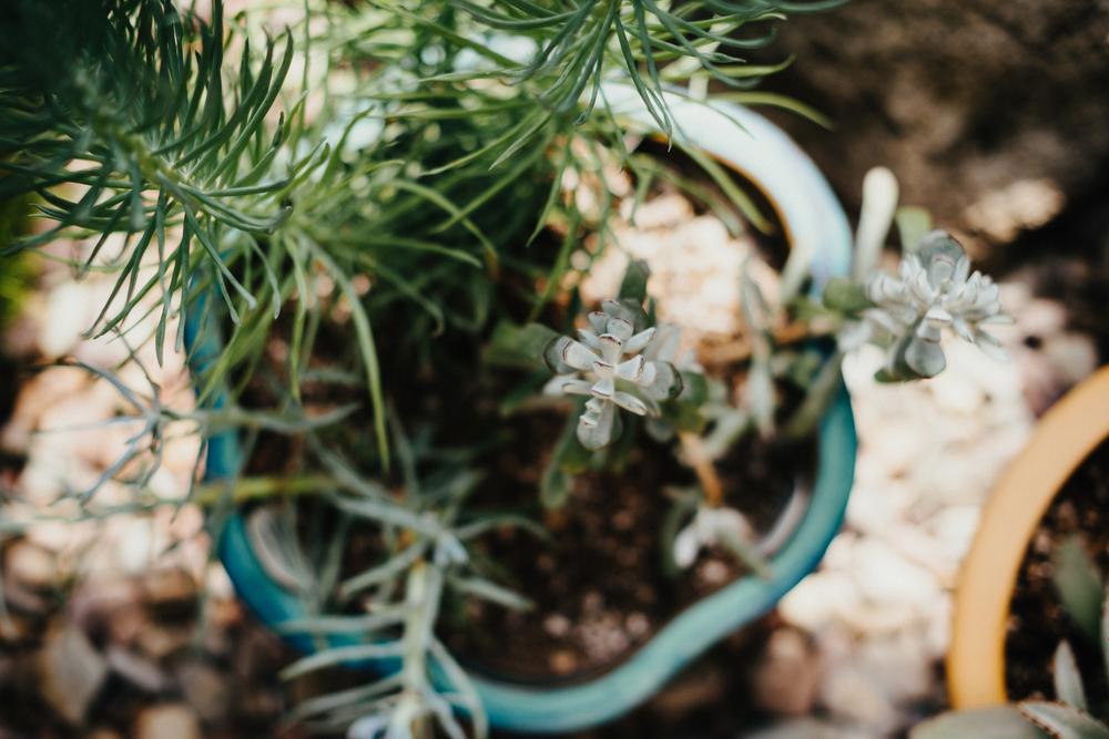 Tacoma Botanical Conservatory 02.jpg