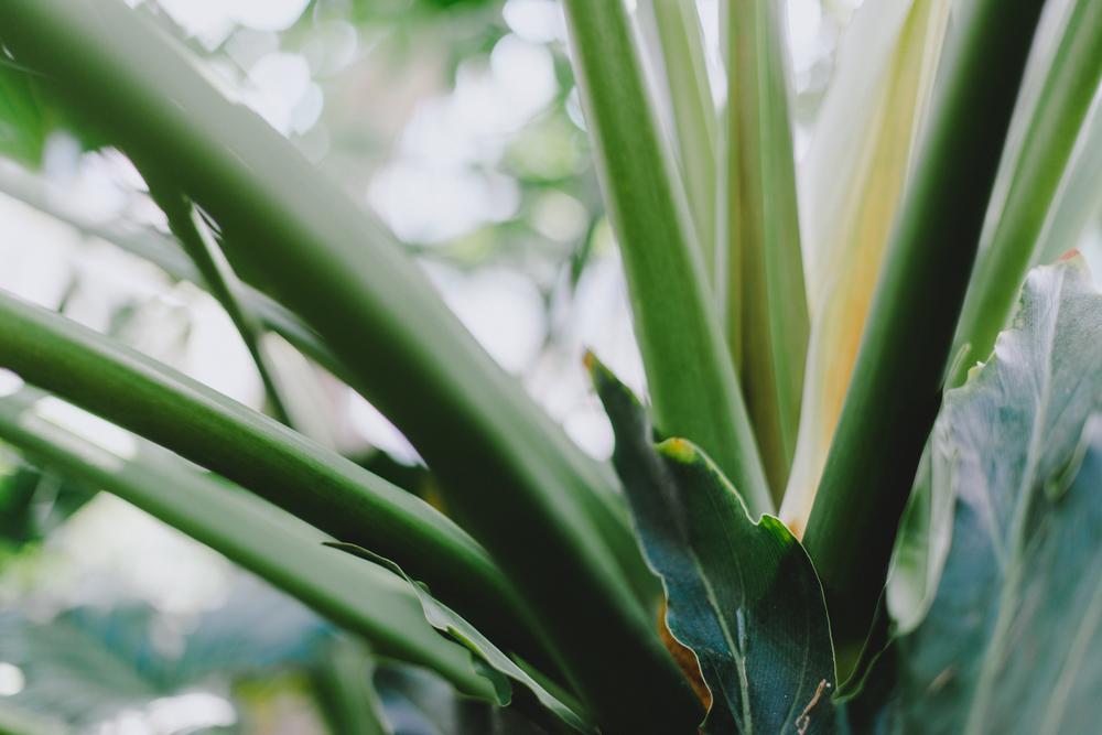 Tacoma Botanical Conservatory 05.jpg
