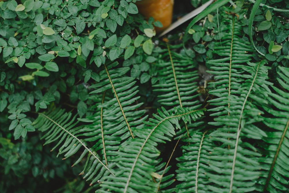 Tacoma Botanical Conservatory 09.jpg