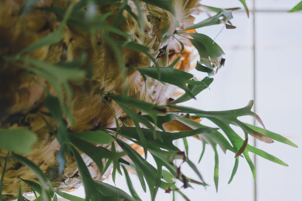Tacoma Botanical Conservatory 12.jpg