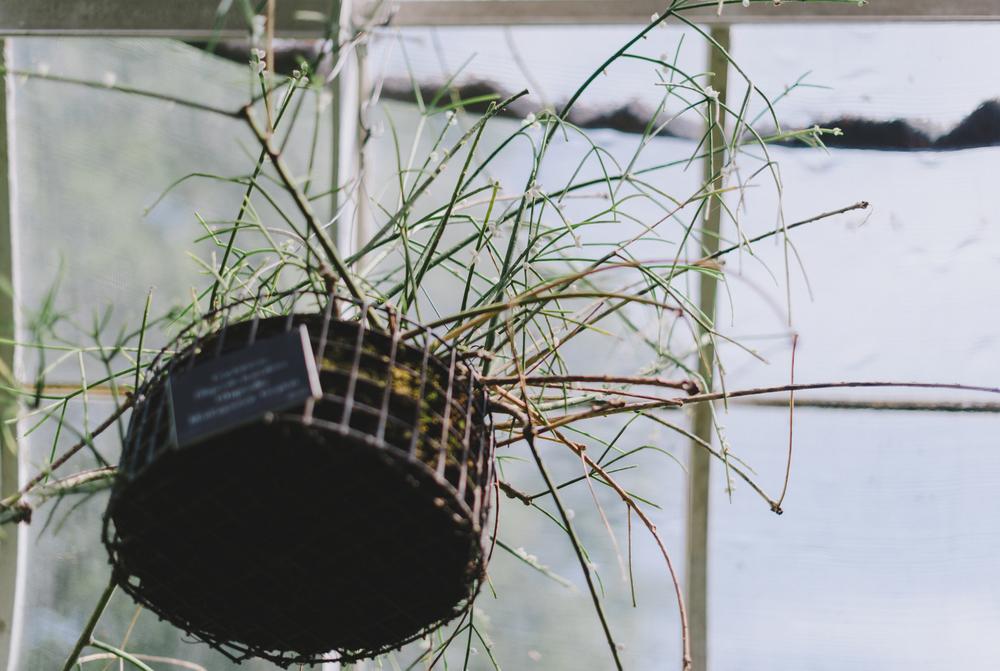 Tacoma Botanical Conservatory 13.jpg