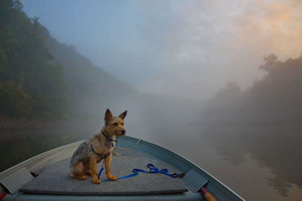 huck dog cumberland river