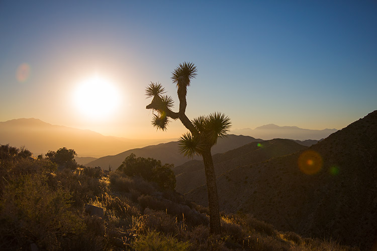 Joshua-Tree-Sunset.jpg