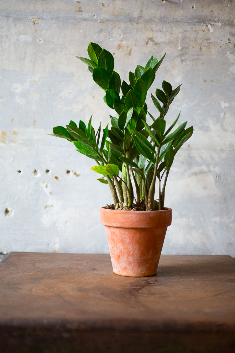 eric-lubrick-photography-plant.jpg