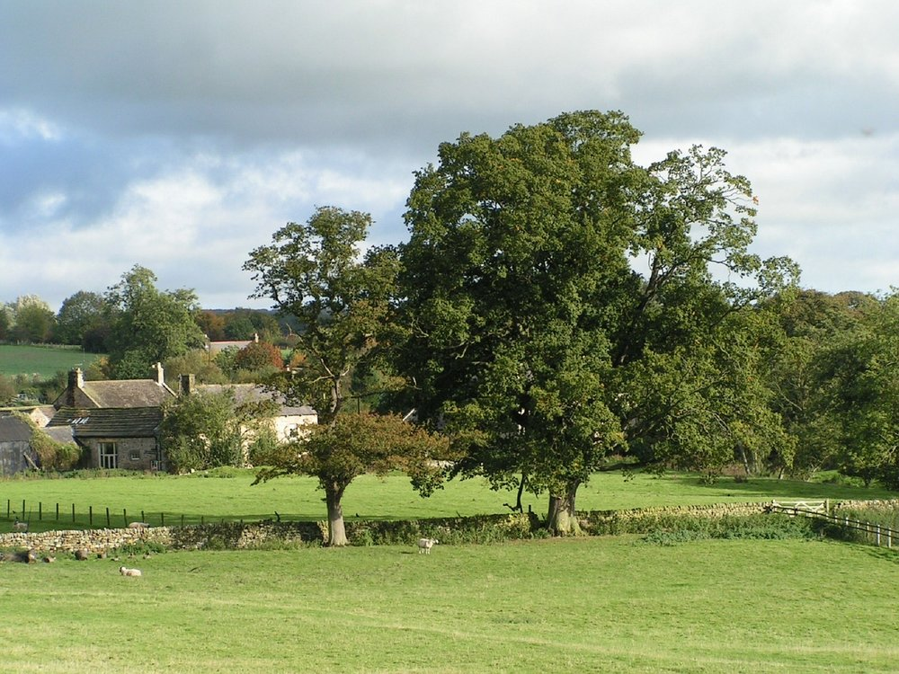 Trees-England-Countryside-Oak-Tree-Landscape-Farm-491182.jpg