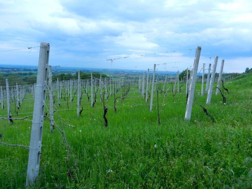 vineyards Croci Vino Per Tutti