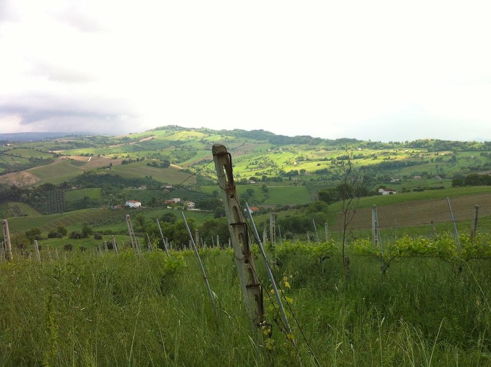 Prachtig uitzicht vanuit de wijngaard