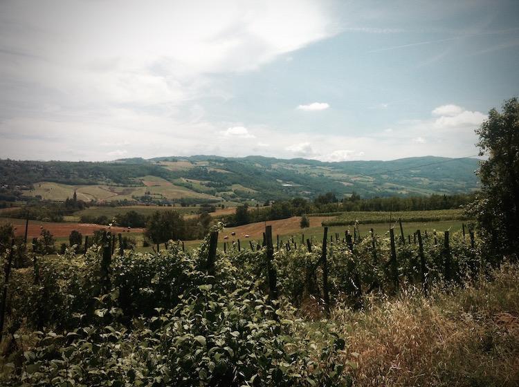 Vino Per Tutti - Andrea Cervini - Vino Del Poggio - Wijngaard - Vinyard 5