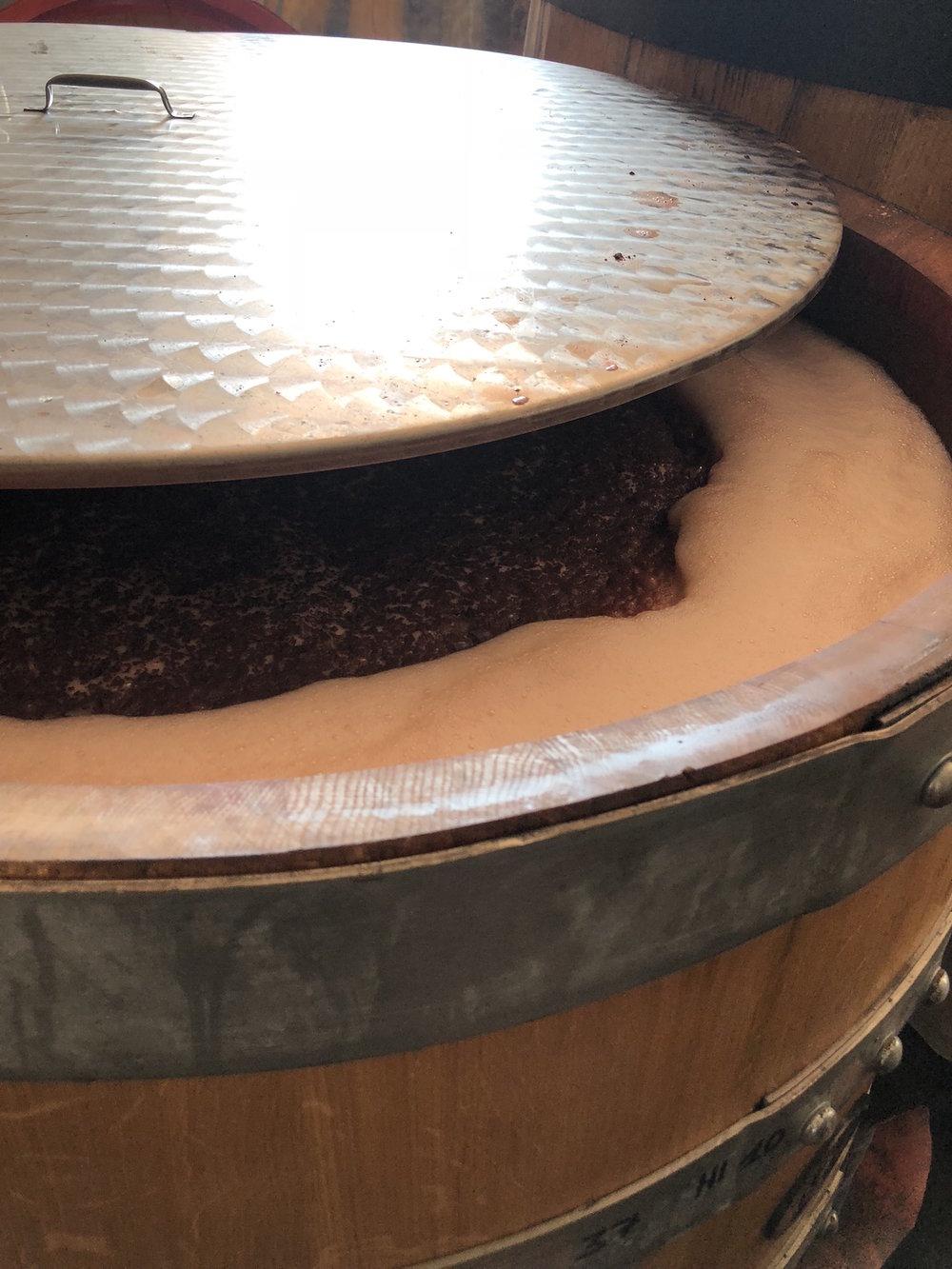 Raina fermentatie