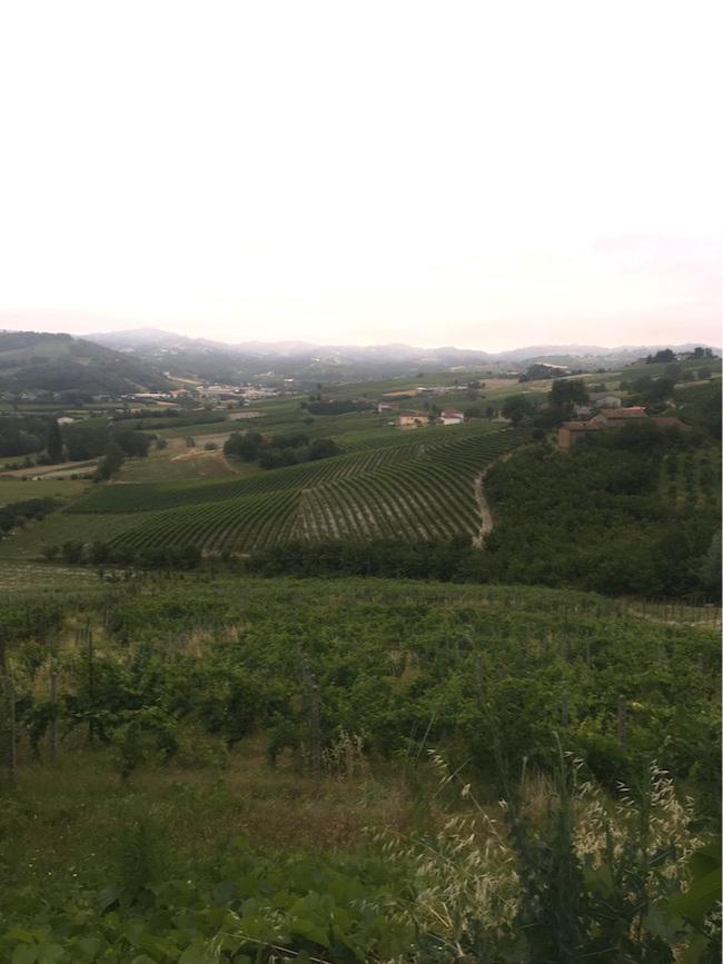 Wijngaard Vittorio
