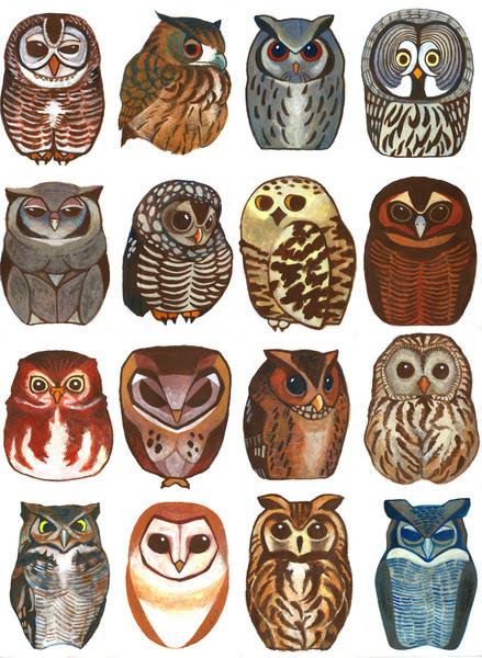 prycie :     owls