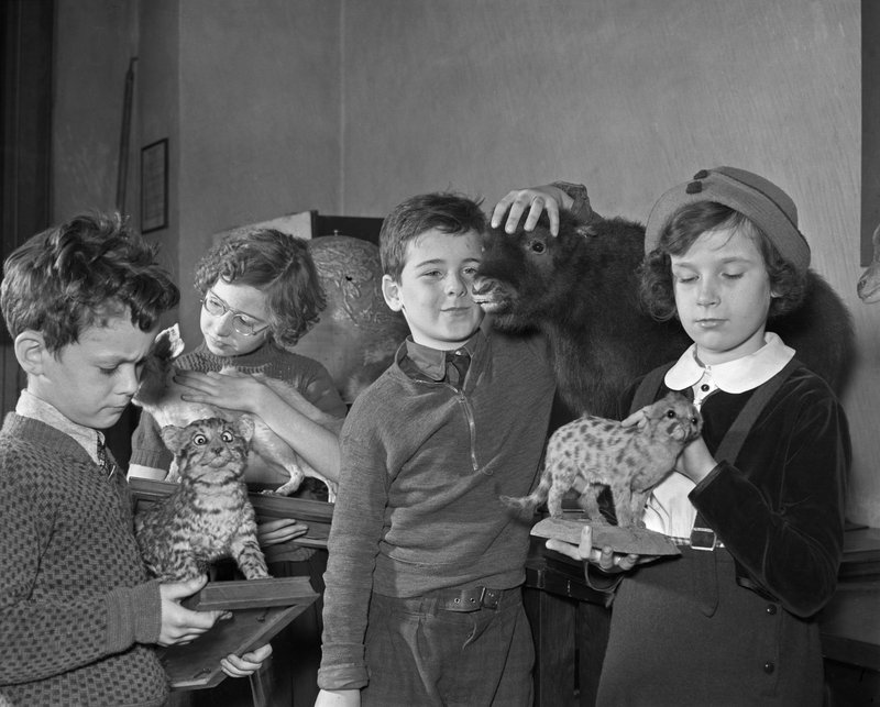 crappytaxidermy :      liquidnight :     Thane L. Bierwert - Children learning about baby animals at Exhibition Hall Talk, November 24, 1937   [From the  American Museum of Natural History  photograph  collection ]