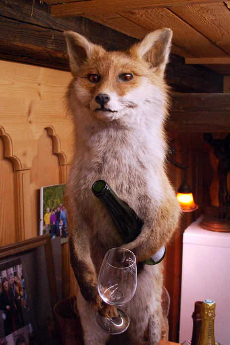 I think this is one of the best taxidermy foxes I've seen.    CRAPPY TAXIDERMY