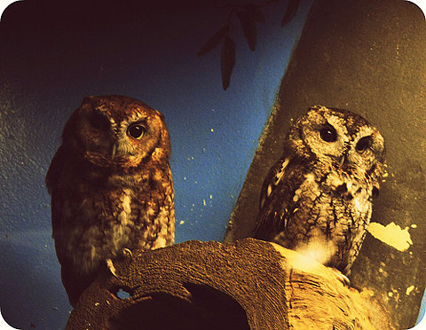 Wise owls FFFFOUND!